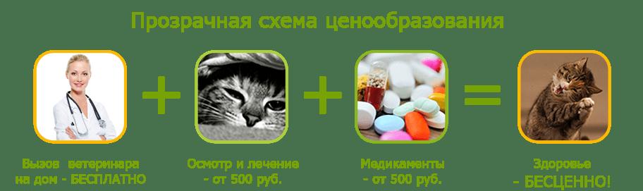 вызов ветеринара для кота