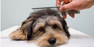 Как правильно ухаживать за шерстью собак