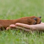 Уход за лапами и когтями собак