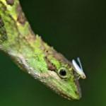 Опасности питания рептилий