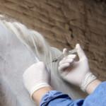 Обязательные прививки лошадей