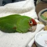 Уход за заболевшей птицей