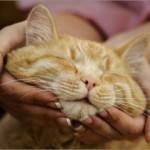 Старость кошки может быть в радость