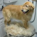Какой уход за шерстью нужен вашей собаке