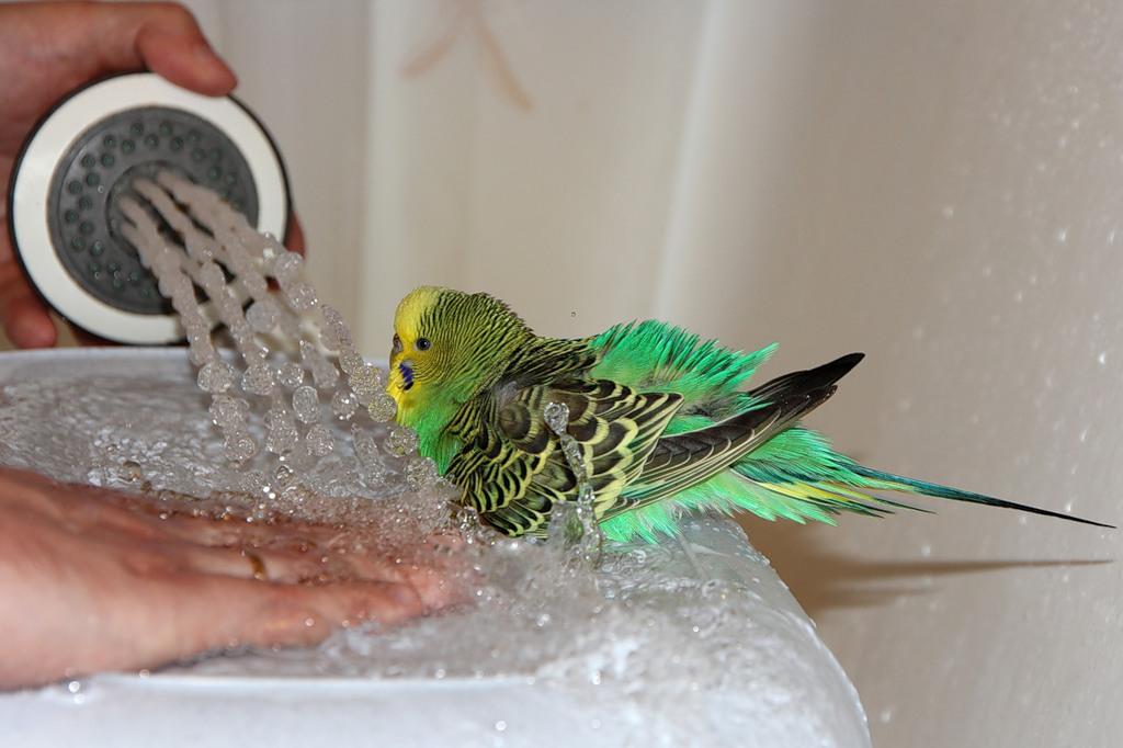 Чем кормят попугая в домашних условиях