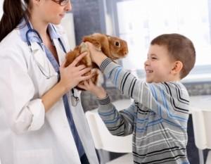 pravila-vakcinacii-dlja-krolikov