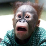 Как дать обезьяне таблетку