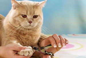 Груминг кошек и котов