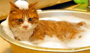 правильное мытье кошки