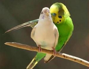 ponizhennyj-immunitet-u-ptic-v-zimnee-vremja