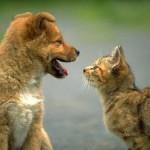 Стоматология для животных так же важна, как и для нас
