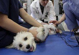 domashnih-zhivotnyh-u-veterinarnogo-vracha
