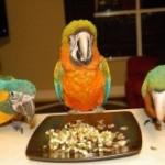 Как усилить иммунитет у попугаев зимой