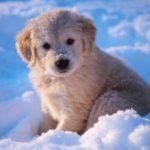 Пониженный иммунитет у животных в зимнее время