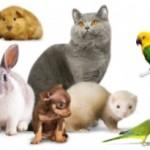 Вывихи у домашних животных