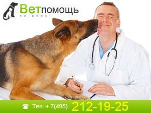 Ветеринар-дерматолог на дом