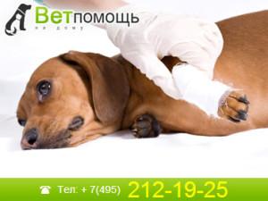 Ветеринар-травмотолог на дом