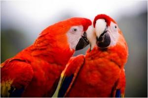 aptechka-pervoj-pomoshhi-dlja-ptic