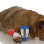 13 Мифов  связанных с диабетом у собак