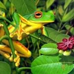 Виды лягушек и особенности их содержания