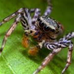 Арахнофобия — боязнь пауков