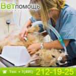 В каких случаях животному требуется срочная ветеринарная помощь