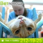 Скорая ветеринарная помощь животным на дому