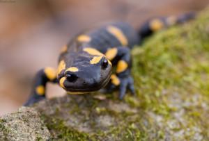 Особенности содержания рептилий