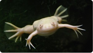 Карантин для рептилий