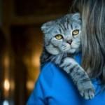 Страх разлуки у кошек. Фелинология