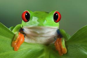 Болезни глаз у лягушек