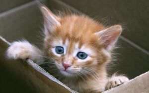 Котята которых продают из коробок