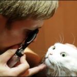Заболевания глаз у кошек и собак. Тревожные симптомы.