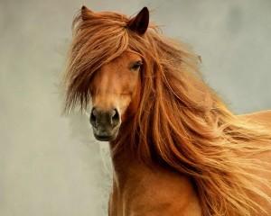 Описание глотки и пищевода лошади