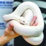 Наиболее частые болезни змей