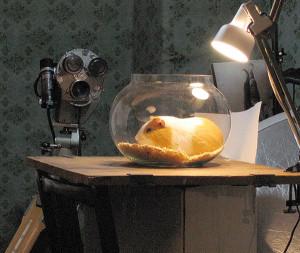 Как ухаживать за больной морской свинкой