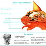 Анатомия и физиология кошки: обоняние