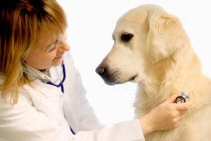 Почему собака кашляет белой пеной и как лечить