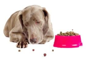Почему собака не ест