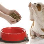 Собака не ест — что с ней произошло и что надо делать?