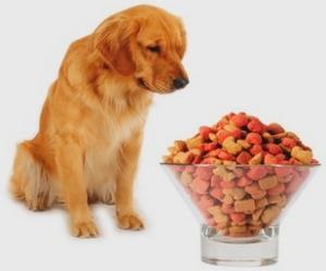 Что делать, когда собака не ест
