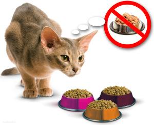 Почему кошка не ест землеройку - 0b8e3