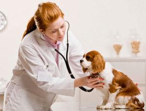 Правила содержания собак после вакцинации
