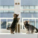 Кот, кошка выпали из окна — что делать, первая помощь, последствия и профилактика