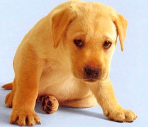 Рвота у собаки из-за инородных тел в глотке, пищеводе или кишечнике