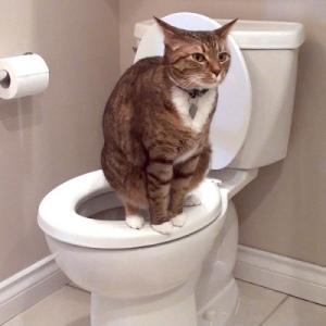 Причины запоров у кошек и котов