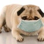 Собака кашляет белой пеной — причины и лечение