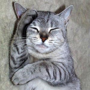Сотрясение мозга у кошек, котов и котят