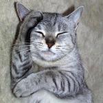 Сотрясение мозга у кошек, котов и котят — признаки, первая помощь и лечение