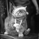 Кровотечения от ран у кошек, котов и котят — виды, симптомы и первая помощь